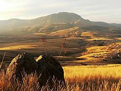 chasseur afrique sud